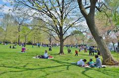 Cherry Blossom Festival  in Washington DC,USA - stock photo