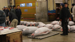 TOKYO - CIRCA MARCH 2013: Bidders at the Tsukiji auction surrounded by raw tuna. - stock footage