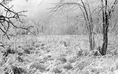 2003 michigan ice storm Stock Photos