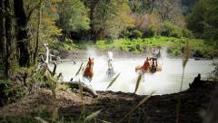 Horses crossing river Stock Footage