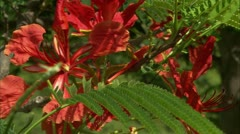 CU of red and orange flowers Stock Footage