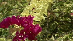Zoom out from flower to landscape Stock Footage