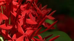 Zoom out from extreme close up to close up of flower Stock Footage