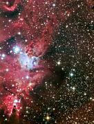 fox fur nebula - stock photo