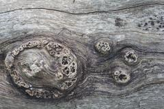 Wood texture or surface Stock Photos