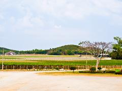 wine yard in nakorn ratchasima, thailand - stock photo