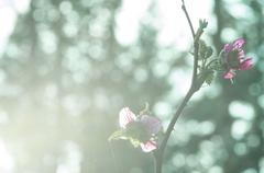 fresh pink flowers in bright morning light - stock photo