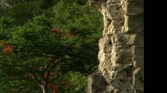 Zoom out of tree to ruins in Guana Stock Footage