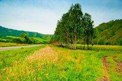 rural landscape with birch trees planted along the road. altai mountains. - stock photo