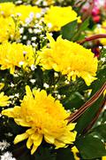Yellow Flowers Bouquet - stock photo