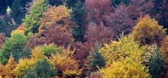 colors of autumn, forest - stock photo