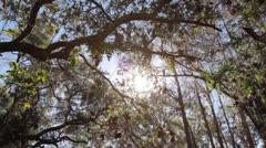 CypressSwampFloridaTilt - stock footage