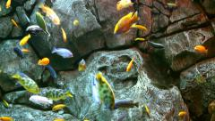 Tropical Fish on a coral reef Stock Footage