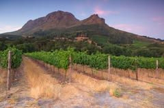 stellenbosch, the heart of the wine growing region in south africa - stock photo