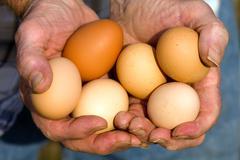 Stock Photo of organic eggs