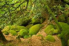 Deep forest in brittany, france Stock Photos