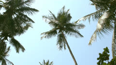 coconut palm trees and sky - stock footage