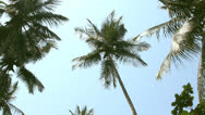 Stock Video Footage of coconut palm trees and sky