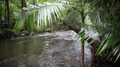 Australia, Daintree National Park, Rainforest River, Panning Stock Footage