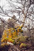 mighty old tree - stock photo