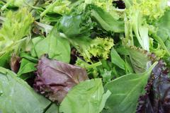 close up of leafy greens - stock photo