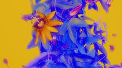 Passiflora07 Stock Footage