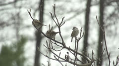 SLOW MOTION: Little birds fly away from the tree Stock Footage