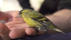 Little bird sitting on man's hand Stock Footage