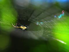 A luminous spider's web Stock Photos