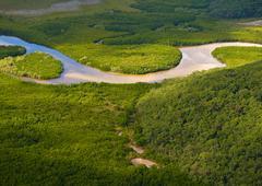 Aerial view of lush coastal wetlands Stock Photos