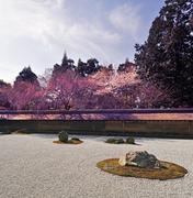 Ryoan-ji garden in spring Stock Photos