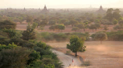 Local herdsmen driving cattle, Bagan Stock Footage