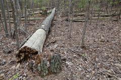 Fallen tree Stock Photos