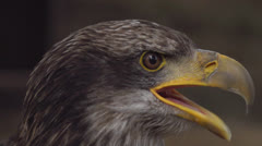 Sea eagle Stock Footage