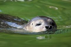 tiiviste uinti laatu villieläinten kohtaus - stock photo