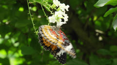 Butterfly resting on a green leaf Stock Footage