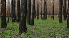 Burnt forest Stock Footage