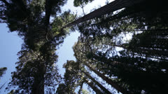 Giant redwood trees and blue sky in Yosemite National Park Stock Footage