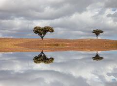 Stock Illustration of two trees alone in alentejo with water reflection