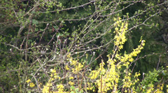 Nature scene trees and plants in the spring Stock Footage