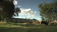 Cows Eating Grass in Empty Lot HD Video Stock Footage