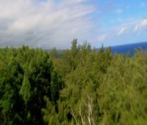 Hamakua Coastline Stock Footage
