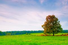 beautiful deciduous tree in a field on a background cloudy sky - stock photo