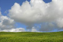 Azores corn field at s miguel island Stock Photos