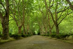 Path with trees in azores, s miguel island Stock Photos