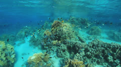 colorful coral reef - stock footage