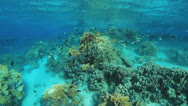 Stock Video Footage of colorful coral reef