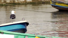 Chile, Chiloe, Great Black Backed Gull Rests On Boat Stock Footage