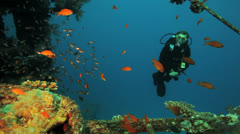 colorful coral at the wreck with diver in the background - stock footage