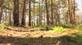 Animal run  POV in wood. Stabilized. Footage